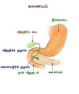 Pancreas_diag_tamil